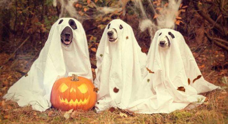 Prepariamoci ad Halloween